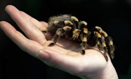 Tarantula Seized By Court Security Staff