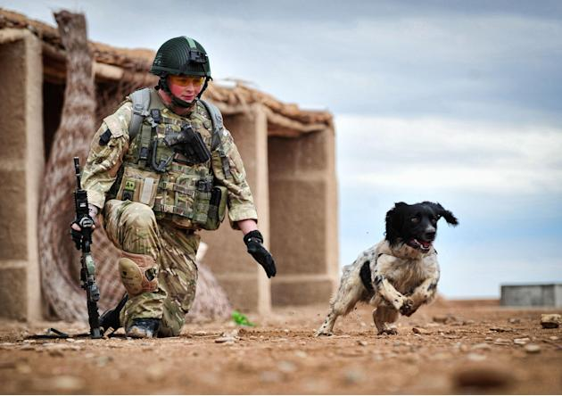 This is a undated Ministry of Defence handout photo made available on Thursday Oct. 25, 2012  of Lance Corporal Liam Tasker and his Springer spaniel mix Theo.   Theo the bomb-sniffing army dog who die