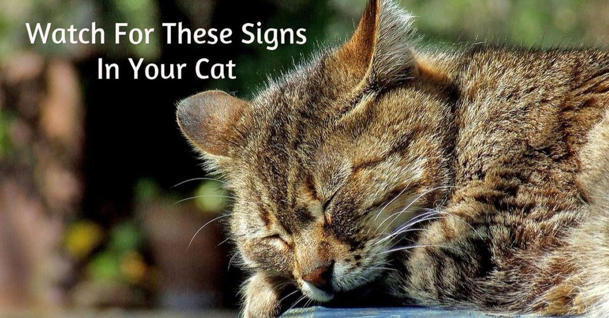 8 Signs Your Cat Might Be Sick