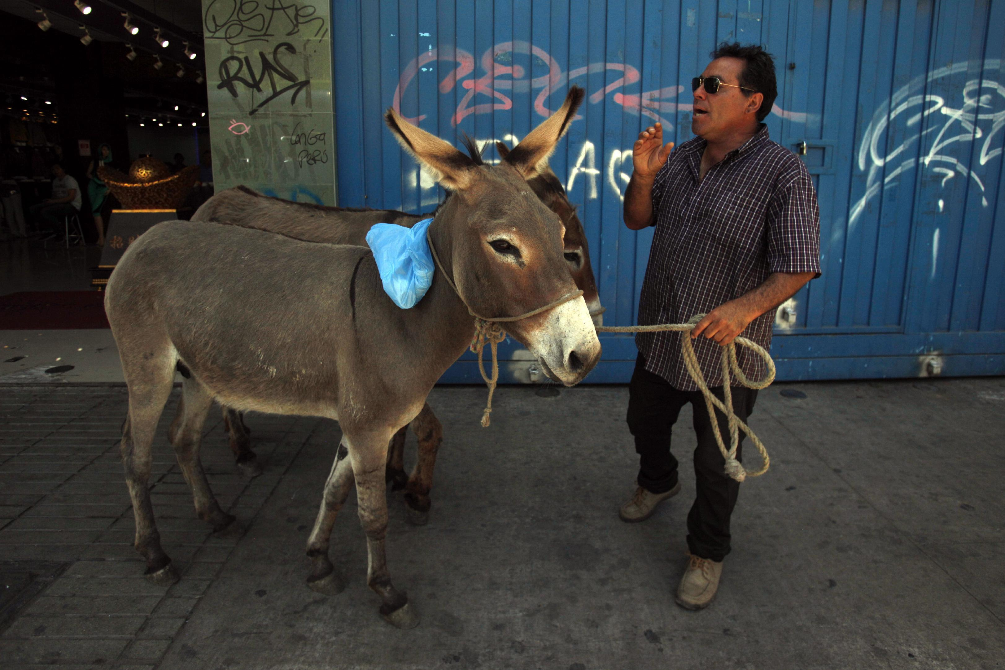 AP PHOTOS: Fresh donkey milk for sale on streets of Chile