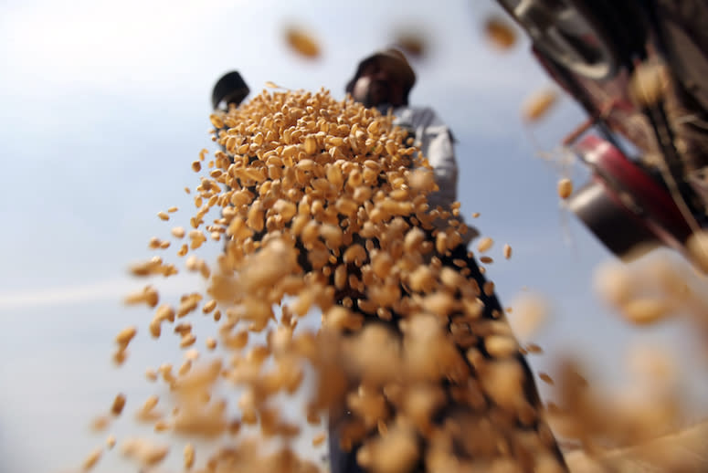 A Silent Scourge Is Wiping Out Crops in Africa