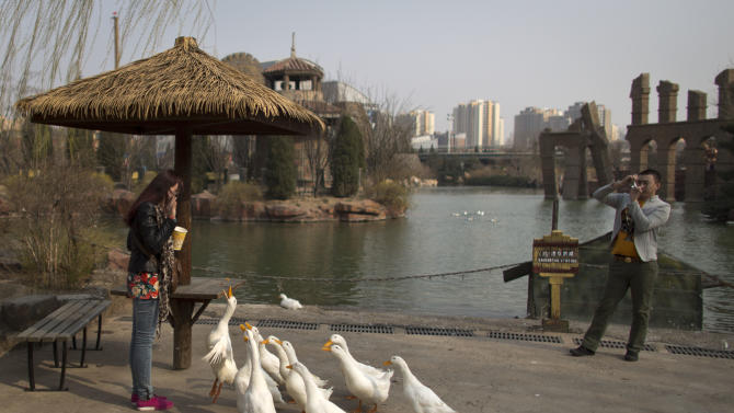 A woman feeds ducks while her boyfriend takes photos at an amusement park in Beijing, China, Wednesday, April 3, 2013. Scientists taking a first look at the genetics of the bird flu strain that recently killed two men in China said Wednesday the virus could be harder to track than its better-known cousin H5N1 because it might be able to spread silently among poultry without notice. The bird virus also seems to have adapted to be able to be able to sicken mammals like pigs. (AP Photo/Alexander F. Yuan)
