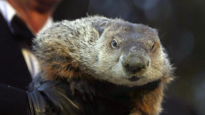 Groundhog Club Co-handler Ron Ploucha holds the weather predicting groundhog, Punxsutawney Phil, after the club said Phil did not see his shadow and there will be an early spring during the Groundhog Day ceremony, Saturday, Feb. 2, 2013 in Punxsutawney, Pa. (AP Photo/Keith Srakocic)