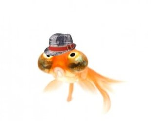 Hipster goldfish looks a little depressed. His hat, however, makes me happy.