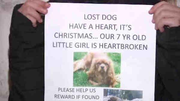 Girl reunited with stolen dog for Christmas