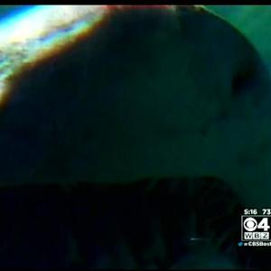 Week of Sharks: Several Species Lurk In Mass. Coastal Waters