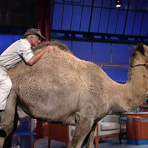 """Jungle"" Jack Hanna's Hump Day - David Letterman"