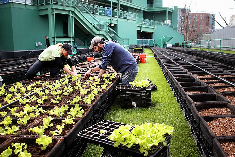 Forget Peanuts and Cracker Jack: These MLB Teams Have Stadium-Grown Greens