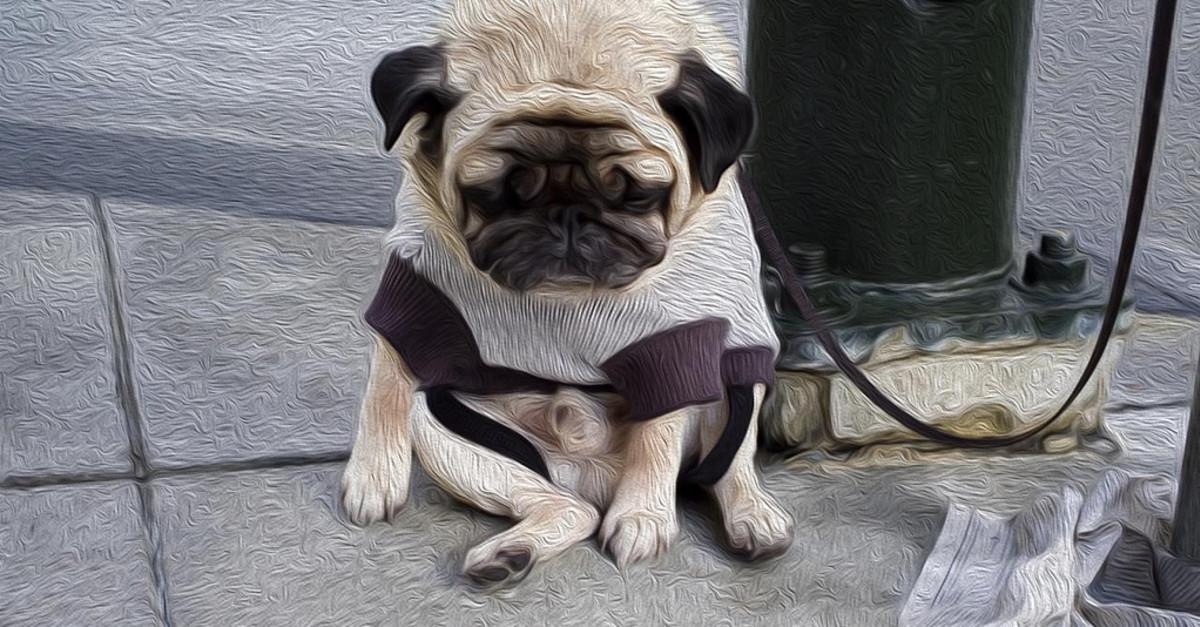 21 Sad Dogs That Will Both Make and Ruin Your Day