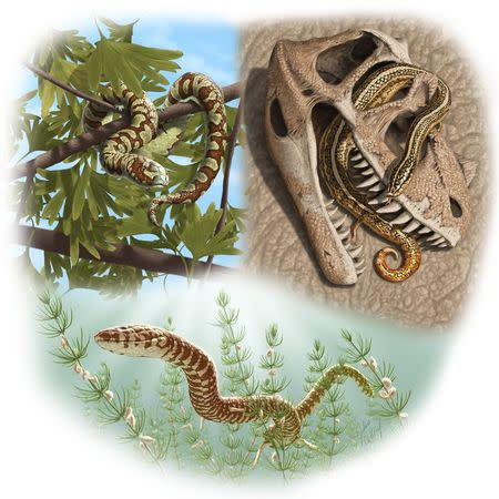 Remarkable fossils push back snake origins by 65 million years