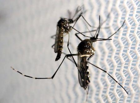 Study finds strong link between Zika and Guillain-Barre