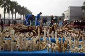 Workers destroy confiscated ivory and ivory sculptures in Dongguan