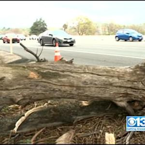 Arborist: Tree That Killed Woman On Interstate 80 Was Dead For Years
