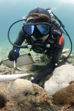 Deadly Coral Diseases Surge Near Dredging Sites
