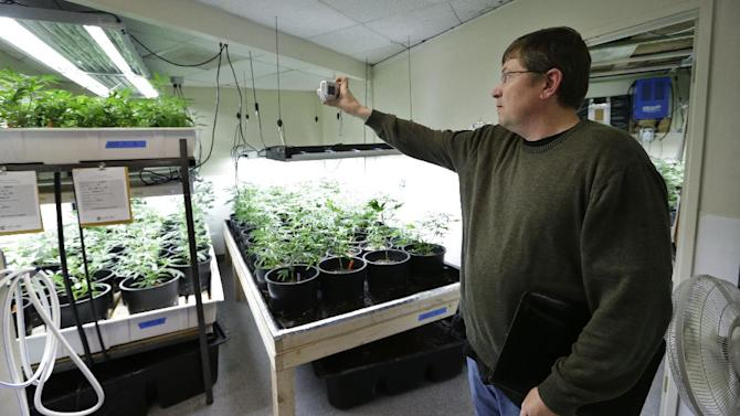FILE -- In this photo taken April 4, 2013, Mike Steenhout, comptroller of Washington's Liquor Control Board, takes photos as he tours a marijuana growing facility in Seattle. After months of intensive research, public meetings and public reaction, state officials on plan to release their draft rules governing Washington's new legal marijuana industry on Thursday, May 16, 2013. (AP Photo/Elaine Thompson, File)