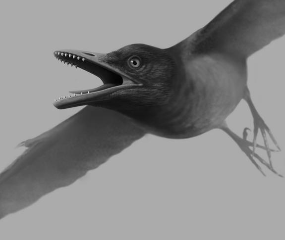 Weird! This Odd, Ancient Bird Had Sharp Teeth