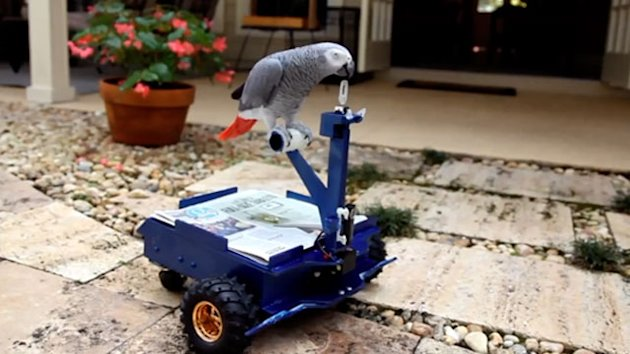 Man Builds Mini Car for Pet Parrot (ABC News)