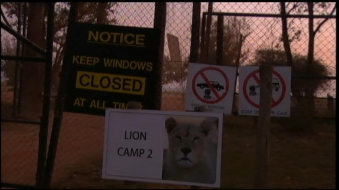 American Tourist Attacked and Killed by a Lion in South Africa