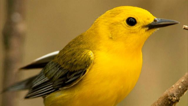 Migratory birds return for the summer