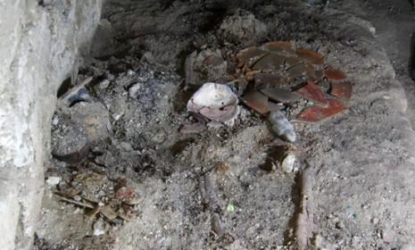 A burial chamber believed to be the tomb of a great Maya queen was recently discovered in Laguna del Tigre National Park in Guatemala.