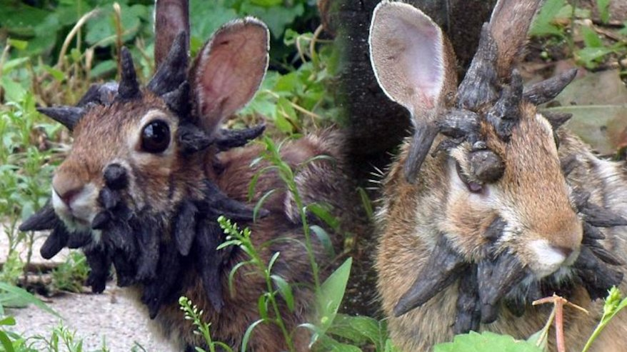 Meet Frankenstein: The Nightmare Horn-Faced Rabbit