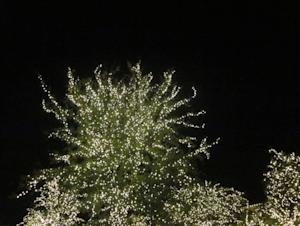 Traditional Holiday Events of Dallas-Fort Worth