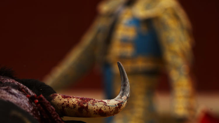 A bull's horn is stained with his own blood as Spanish bullfighter Manuel Escribano performs during a bullfight in Toro, Spain, Thursday, Aug. 28, 2014. In August hundreds of villages around Spain celebrate their patron saints, with bullfights, music and parties on the streets.(AP Photo/Daniel Ochoa de Olza)