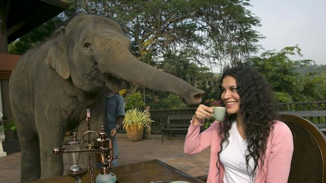 Elephant Dung Coffee Thailand