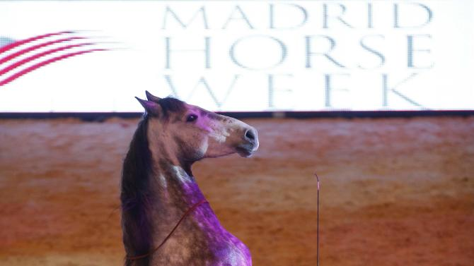 Miron Bococi performs with one of his horses during Madrid Horse Week in Madrid