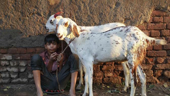 A boy sells a pair of goats at a livestock market on the eve of the Eid al-Adha festival in Delhi