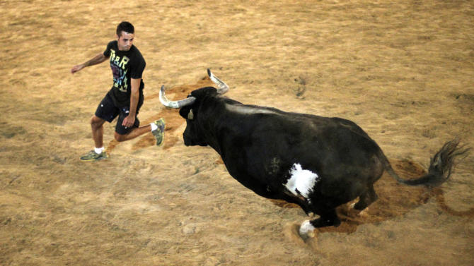 In this photo taken on Sept. 9, 2011, a reveler runs away from 'Raton' the killer bull in the early hours of Sunday during a festivity in Sueca, near Valencia, Spain, The hulking black and white bull, 'Raton' (Mouse),  a 1,100-pound (500-kilogram) beast who has killed two people in the arena and injured five others over the years at pueblo (village) parties where he's released in a ring and amateur daredevils provoke him so he'll chase them around to the cheers of thousands. Nobody got killed this time. (AP Photo/Alberto Saiz)