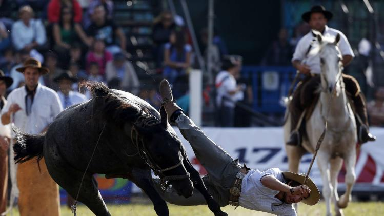 A gaucho is kicked by a wild horse during the annual celebration of Criolla Week in Montevideo