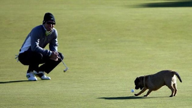 Paul Casey's putt for eagle stolen by dog, Kingsbarn's, 2012 (Getty)