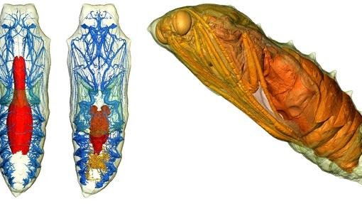 Caterpillars Morph into Butterflies in Amazing 3D Images