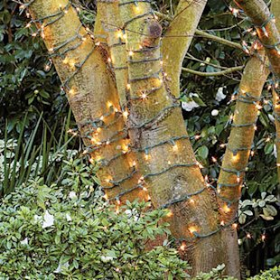 Wrap tree trunks with white lights