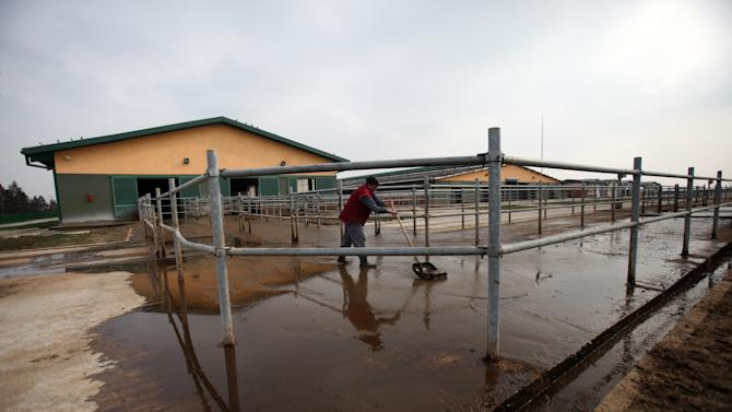 A worker cleans the yard of a dairy farm in Dobanovci, near Belgrade, Serbia, Wednesday, Feb. 20, 2013.  Officials in Serbia on Wednesday have ordered some brands of milk taken off store shelves following weeks of delays and widespread public outrage about the high levels of the toxin aflatoxins found in the milk, which is known to be a progenitor for cancer. (AP Photo/Darko Vojinovic)