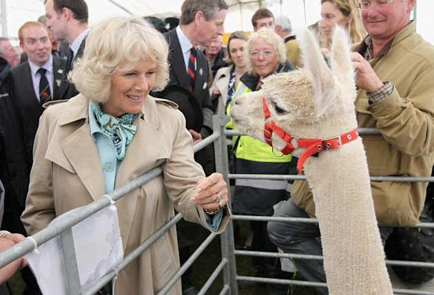 The Duchess of Cornwall Visits the Royal Cornwall Show