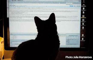 Content Marketing Is About People, Not SEO image catreading