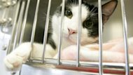 In 2012, about 5,800 cats were brought in to the Winnipeg Humane Society and more than 2,000 were euthanized.