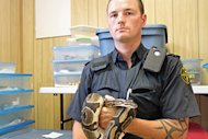 Brandon James, of the Brant County SPCA, holds one the 40 ball pythons that was seized at a Brantford motel on Thursday evening. (Cory Ruf/CBC)