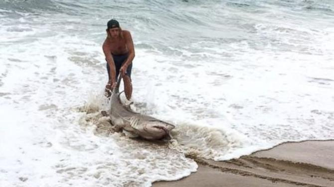 Men Catch Shark on North Carolina Beach as String of Attacks Rattle Nerves