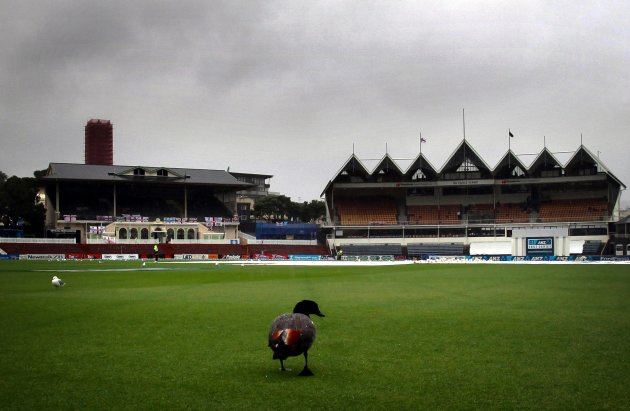 A duck walks on the outfield during a rain delay on the final day of the second test between England and New Zealand at the Basin Reserve in Wellington