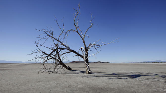 In this Dec. 27, 2010 photo, the barren earth and dead trees reveal the blight of the Salton Sea, where water conservation efforts are attempting to restore the once natural playground and tourist site. The evaporating Salton Sea is the flashpoint for the latest dispute in California's water wars, testing an uneasy alliance that has sought to wean the Golden State from overreliance on Colorado River water. (AP Photo/Lenny Ignelzi)