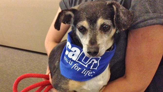 Pet of the Week: Dachshund-mix named Alfred