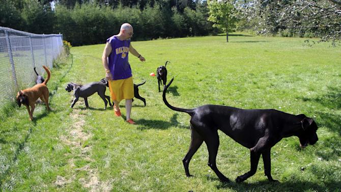 In this photo taken Thursday, Aug. 9, 2012, Larry Lombardi walks dogs at his kennel in Milan, N.H. Lombardi has been taking in pets as employees arrive to work at the new federal prison in Berlin, N.H. (AP Photo/Jim Cole)