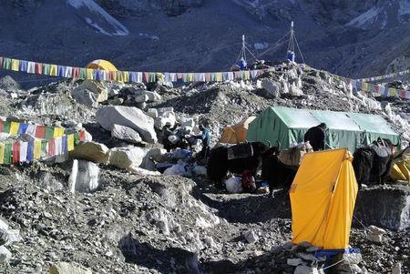 Sherpas load mountaineering equipments used for climbing on yaks after Mount Everest expeditions were cancelled