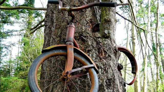 Lost Bicycle Swallowed by Wash. Tree
