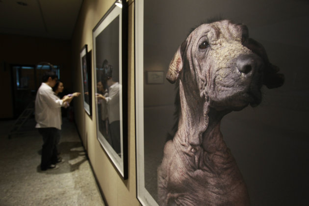 In this photo taken on Wednesday, April 25, 2012, Taiwanese photographer Tou Chih-kang hangs his portraits of the final moments in the lives of shelter dogs for a public exhibition in Taoyuan, norther