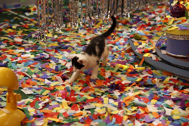 "A kitten plays during Kitty Half-time as seen on ""Puppy Bowl VIII."""