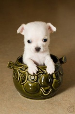 Small Puppy Last month, we brought you the 10 best big dog breeds for ...